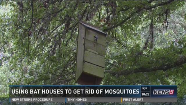 how to get rid of mosquitoes in florida